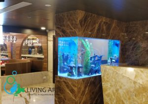 """Fish Tank for Hotel in T.Nagar , Chennai"""